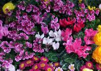 Offerta Flora Trade Show 2015 Rimini