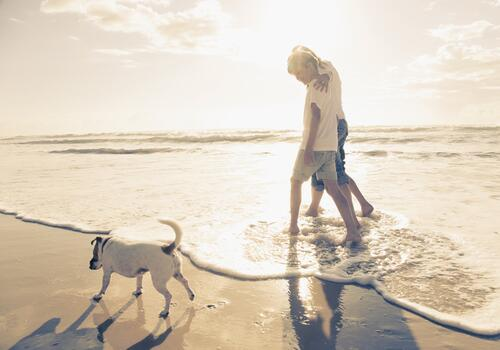 Vacanze in hotel 4 stelle pet friendly con piscina a Rimini