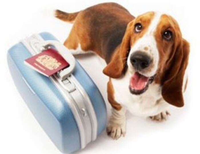 SIAMO UN HOTEL PET FRIENDLY!