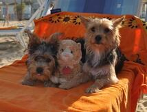 SEPTEMBER HOLIDAY IN RIMINI WITH OUR PETS NEAR THE SEA