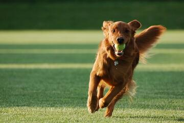 Hundefreundlicher Urlaub am Campingplatz in der Toskana