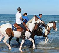 Risultati immagini per A Cavallo del Mare Cervia