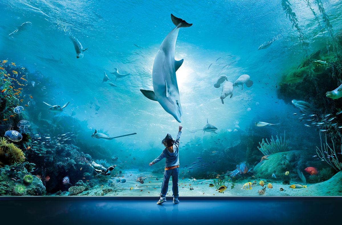 Aquarium Besuchen