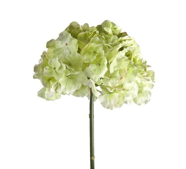 Ortensia alta color crema fiori e piante artificiali for Colore ortensia