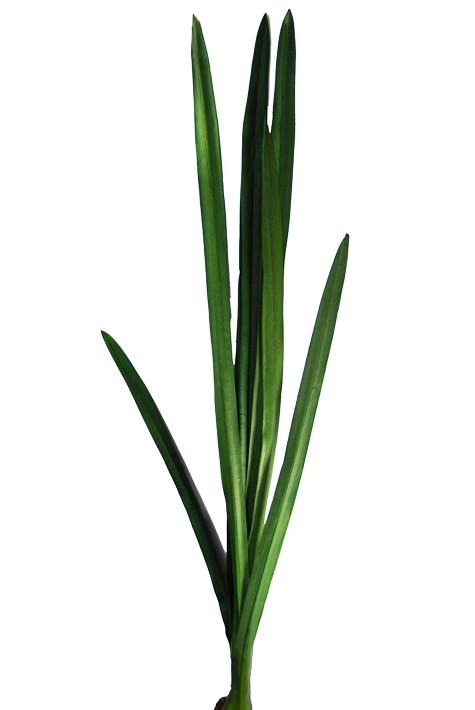 Pianta di orchidea cymbidium fiori e piante artificiali for Orchidea pianta