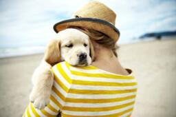 Offerta vacanze con animali in hotel a Rimini con spiaggia attrezzata