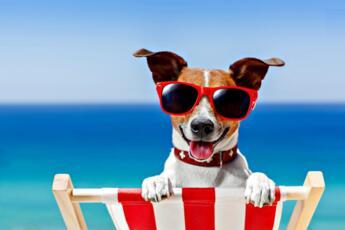 Offerta Hotel Rimini con Animali Ammessi vicino alla Spiaggia