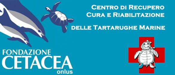 FONDAZIONE CETACEA | MEETINGS ON THE SEA AND ITS POPULATION ON THE BEACH