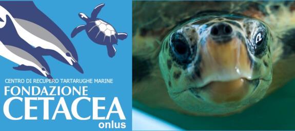 fondazione cetacea Riccione incontri sul mare e i suoi abitanti ospedale delle tartarughe spiaggia