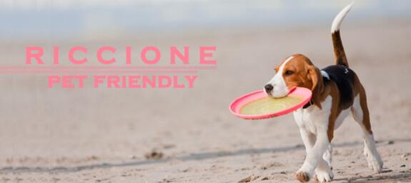 PET-FRIENDLY BEACHES IN RICCIONE | Look for your nearest dog friendly beach