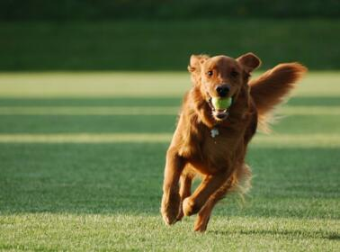 Dog friendly holidays in camping in Tuscany