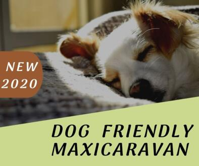 2020: Take your dog with you