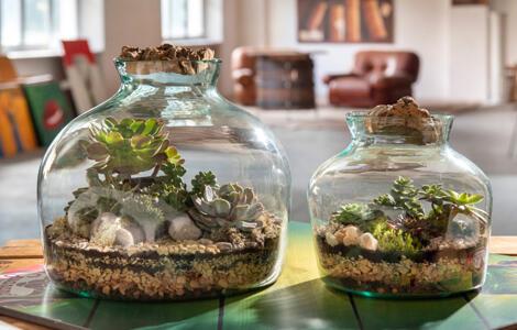 Terrarium di piante vere: pezzi d'arredo creati per emozionare.