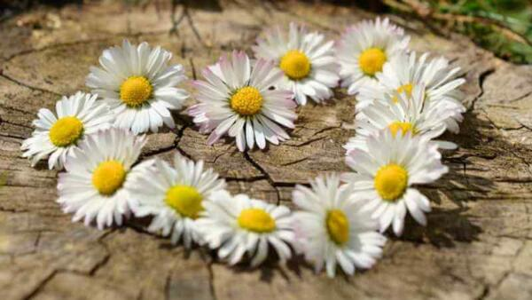 SPECIALE 25 APRILE:  Benessere di primavera imperdibile da €310