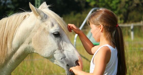 Un pomeriggio in compagnia dei cavalli