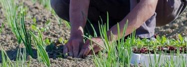 Mani sporche di terra (per ortisti ed aspiranti tali)