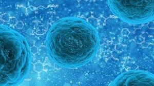 Cellule staminali per capelli: uno sguardo al futuro