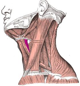 Tiroide e capelli: ecco cosa li accomuna