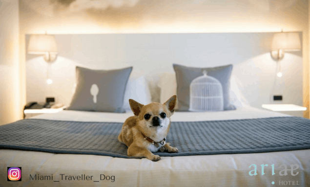 PET FRIENDLY HOTEL SAN GIOVANNI ROTONDO
