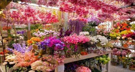WEEKEND OFFER - CATTOLICA IN FLOWER - FLOWER FESTIVAL FROM 28.04 TO 01.05