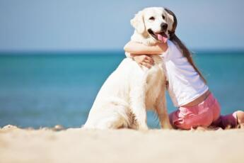 Hotel Offer for pet-friendly Vacations in Rimini