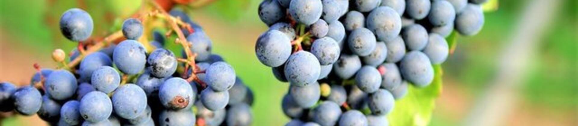 Degustazione di vini DOC DOCG IGT d'Abruzzo