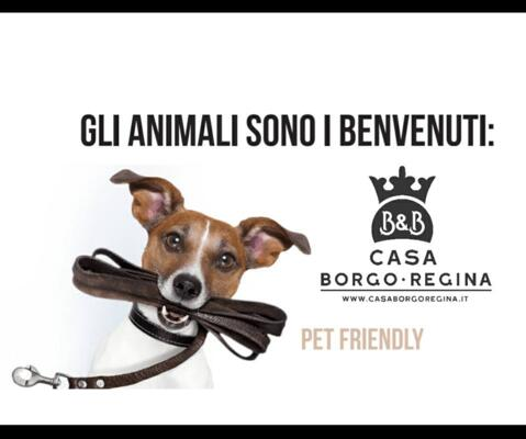 Bed and Breakfast dog friendly a Bari
