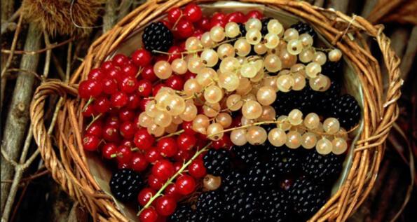 Sagra dei piccoli frutti a Fontainemore