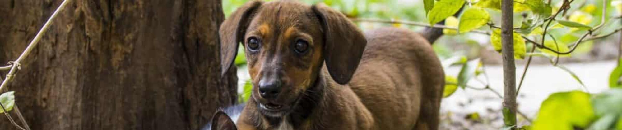 Vacanze in masseria nel Salento: la soluzione Pet Friendly