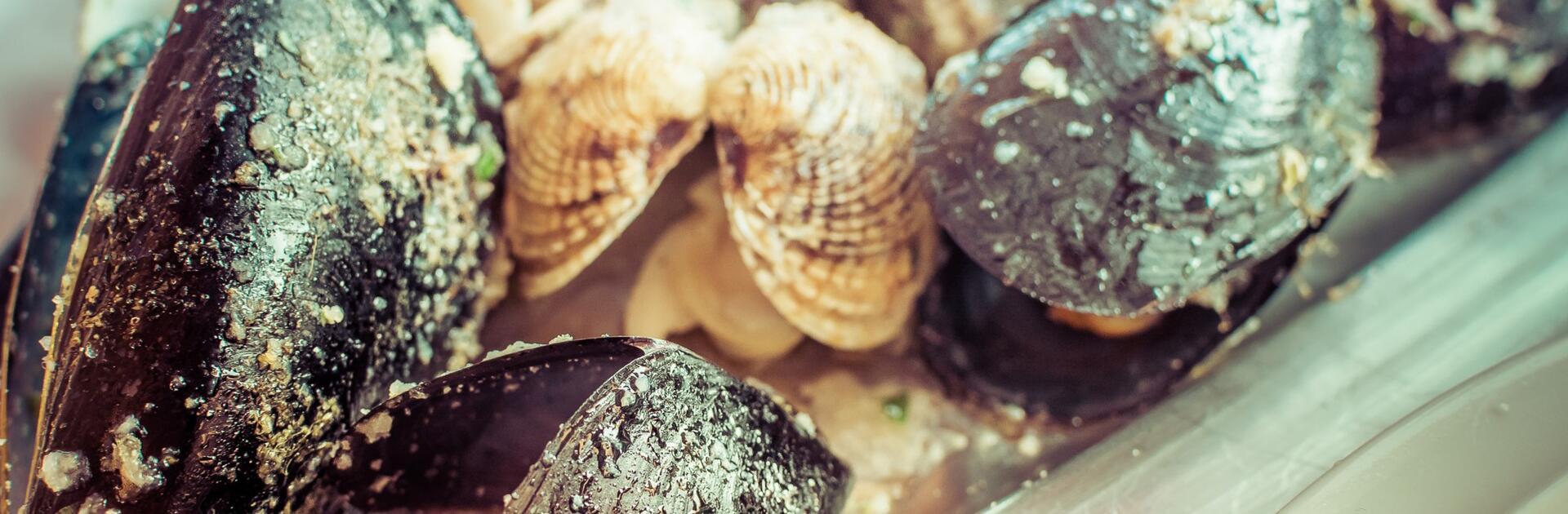 La Pescheria: auf Entdeckungsreise im Fischmarkt von Catania