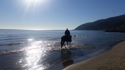 7-DAY PROMO ON HORSEBACK woods and races on the beaches of Savona