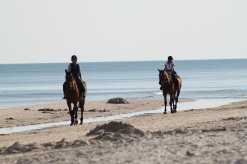 PROMO 7 DAYS ON HORSE in spring and autumn to discover enchanting places