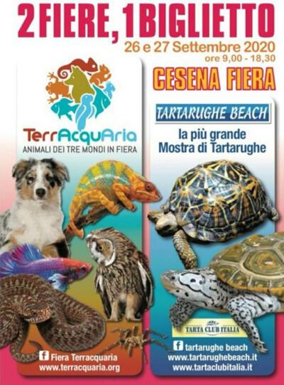TARTARUGHE BEACH 2020