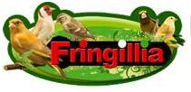 FRINGILLIA