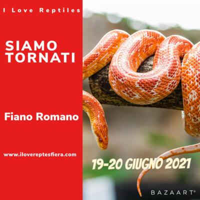 I Love Reptiles Fiano Romano