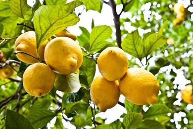 sanmarinoviaggivacanze it campania-sorrento-giallo-limone-12 003