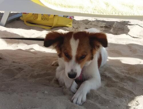 GIRASOLE camping village - Amici a 4 zampe in spiaggia mista