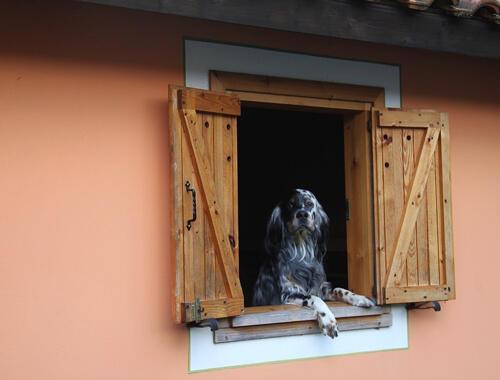 Affacciati alla finestra amore mio !