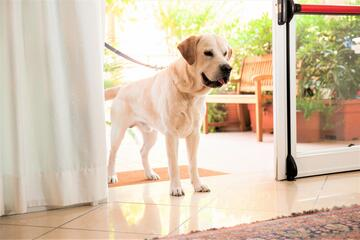 Residence Pet Friendly Rimini
