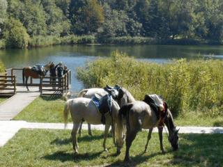 Cavallo e natura