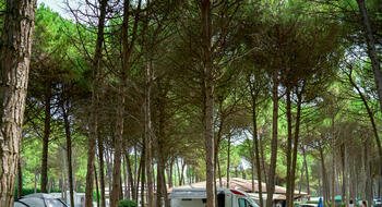 iltridente en 3-en-275740-news-at-camping-residence-il-tridente-never-go-on-holiday 008
