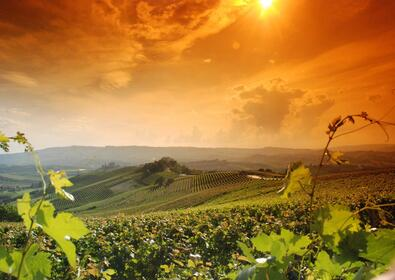 Costa degli Etruschi: Vin- og oliestien