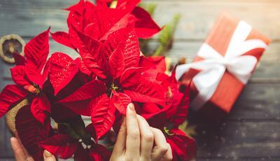 Offre Fête de l'Immaculée Conception à Cesenatico au camping près des marchés de Noël