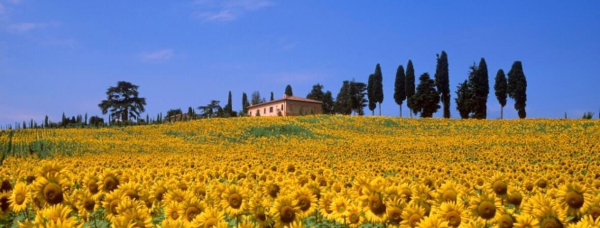Massa Marittima (Toskana)