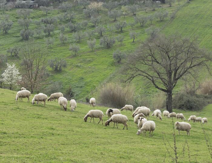 Visita de la granja