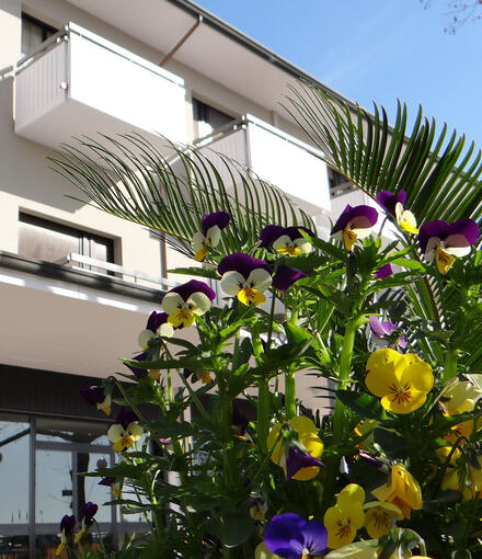 genzianellahotelcervia it home 012