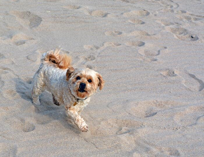 Free holidays for your pet on Sardinia