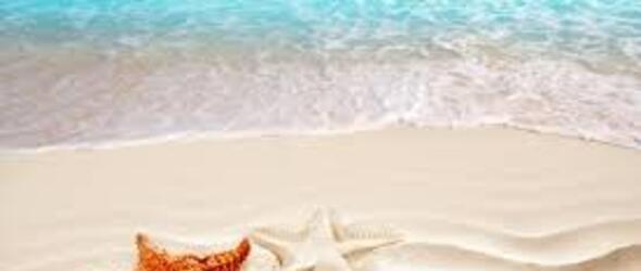 hotelstefan it offerte-acquario-le-navi-hotel 011