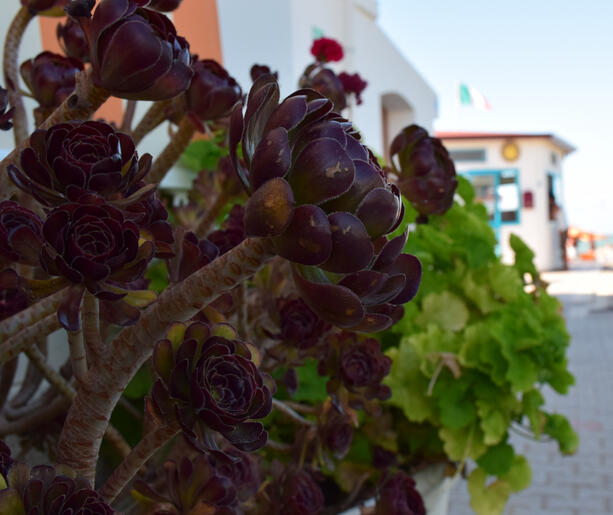 HOLIDAY OFFER IN JUNE IN A VILLAGE ON THE SEA IN VIESTE
