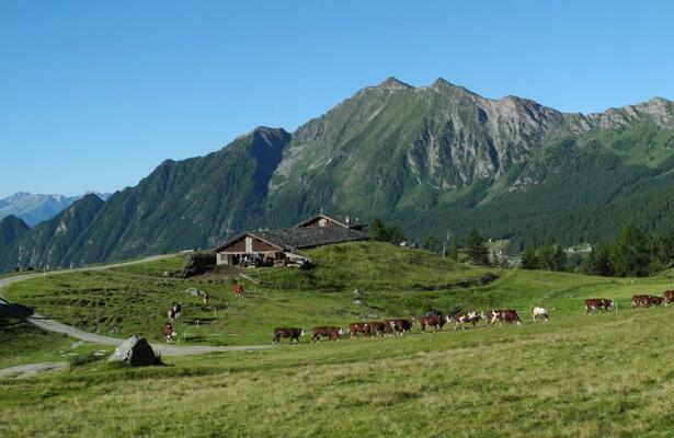 Alpine pastures in the Aosta Valley: La Tchavana farmhouse in Ayas